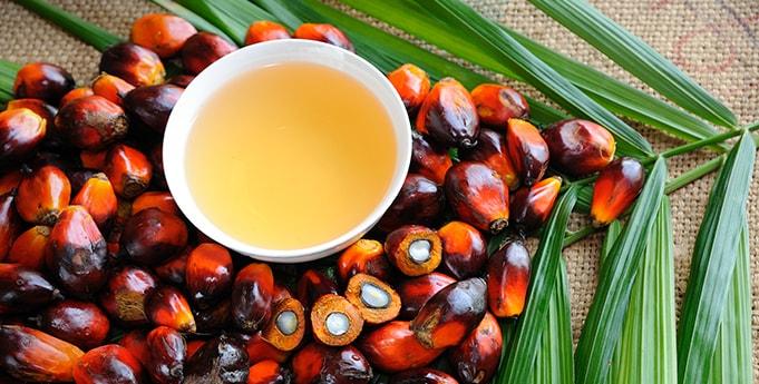Wie schädlich ist Palmöl?